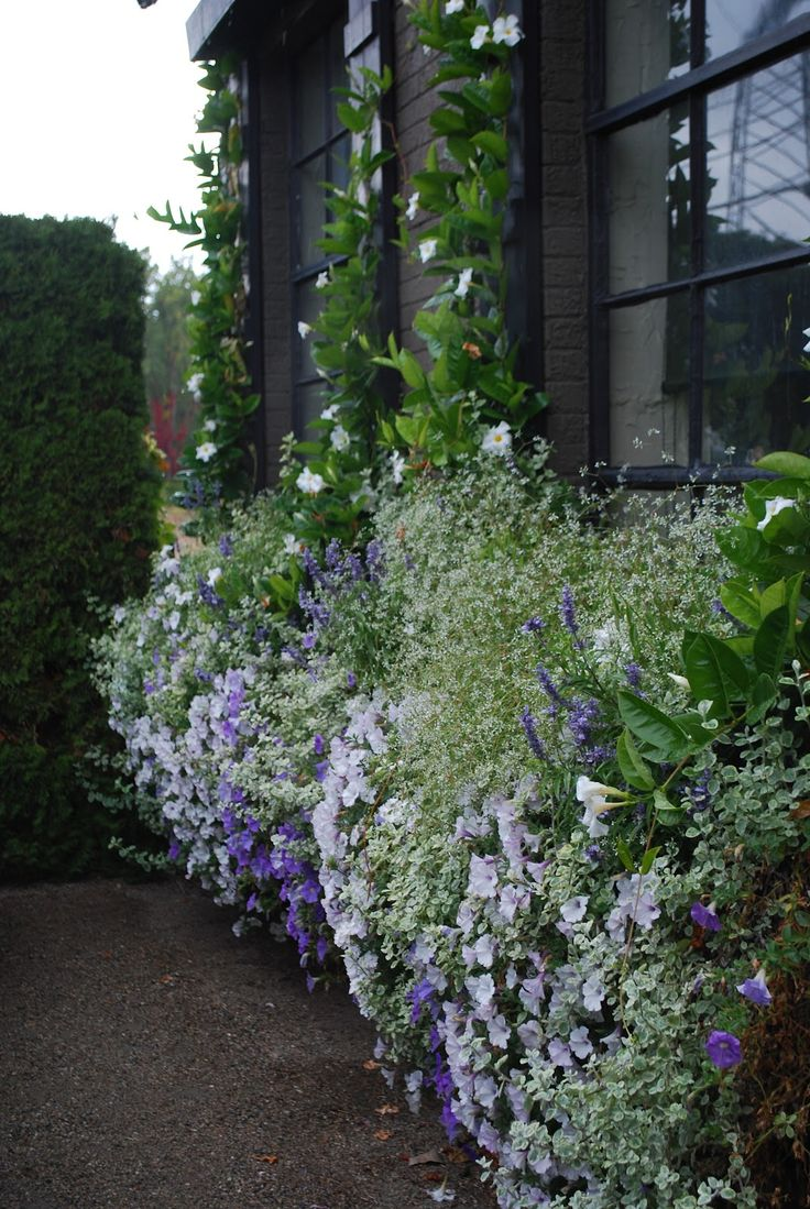 Detroit Garden Works: climbing mandevillas underplanted with petunias, licorice plant, salvia and euphorbia