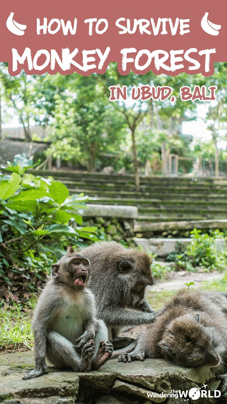 How to survive Monkey Forest in Ubud - Bali, Indonesia - Wandering the World - #monkeyforest #visitubud