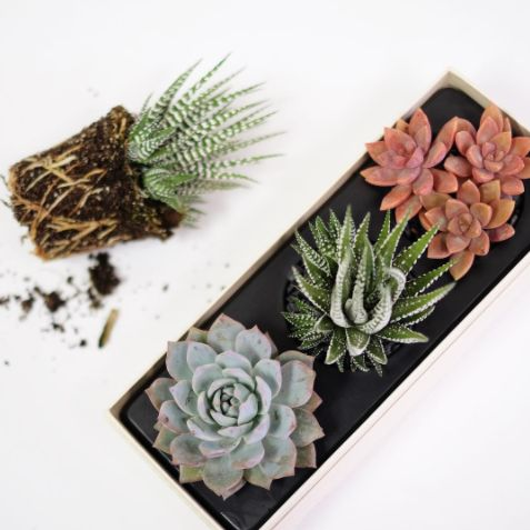 A set of succulents for a breath of fresh air. | 25 Housewarming Gifts That People Will Actually Want