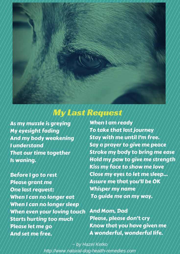 A poem for all dog parents, especially those with aging dogs. Making the decision to help our dogs cross the Rainbow Bridge is difficult. This page may help: http://www.natural-dog-health-remedies.com/canine-euthanasia.html