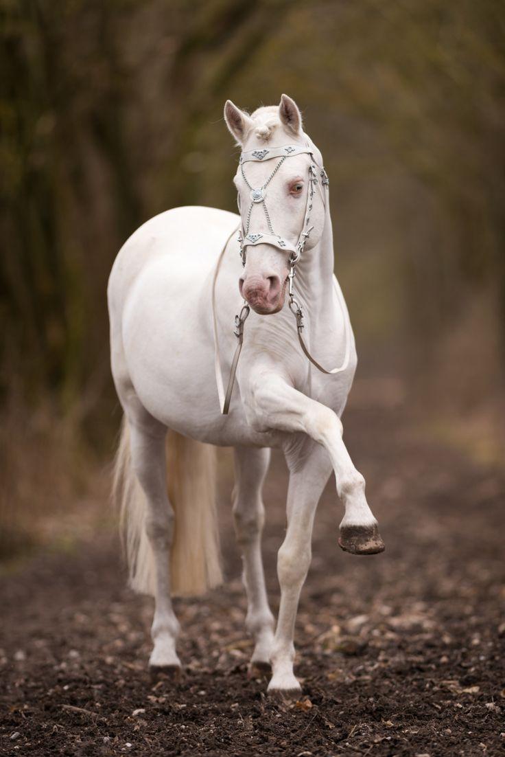 Pferdefotografie und Hundefotografie. Einzigartige Pferdefotos