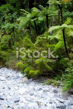 Punga Tree Ferns and Native Bush, New Zealand Royalty Free Stock Photo
