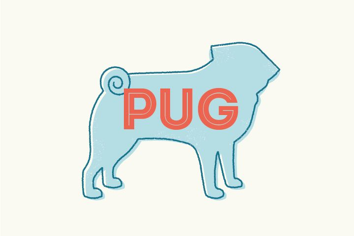 Breed Spotlight: Facts about Pugs #puglife
