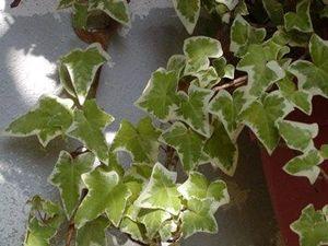 Lo sapevi che l'aria dentro casa potrebbe essere oltre 20 volte più inquinata di quella esterna? Ecco i tipi di piante da appartamento che ti aiutano a tenere pulita l'aria in casa!