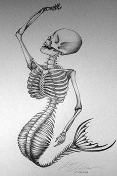 Google Image Result for http://www.freewebs.com/evil-pirate-squirl/mermaid-skeleton-sm.jpg