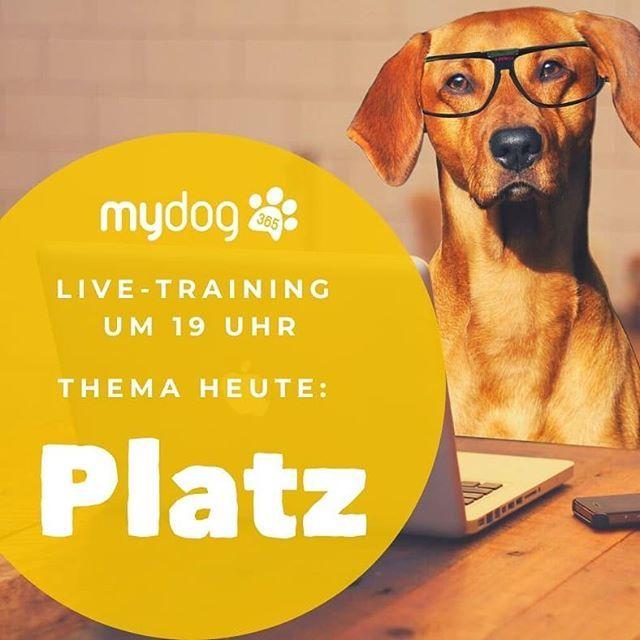Sozialisierungsphase Was Dein Welpe Jetzt Lernen Sollte Mydog365 Magazin In 2020 Hundenamen Bolonka Zwetna Schosshund