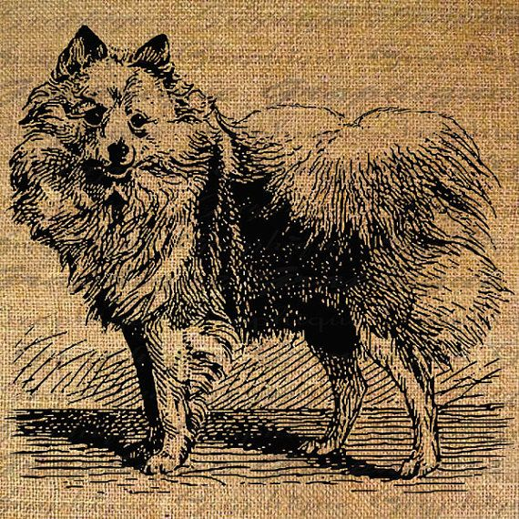 Westpommern Hunderasse Hunde Hunde digitale Collage von Graphique, $1.00