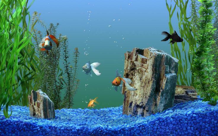 Free Aquarium Screensaver - Download