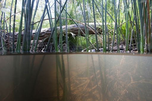 Grampians Bioscan: Underwater aquatic river habitat, Mackenzie River near falls, Grampians National Park - Mark Norman — Google Arts & Culture