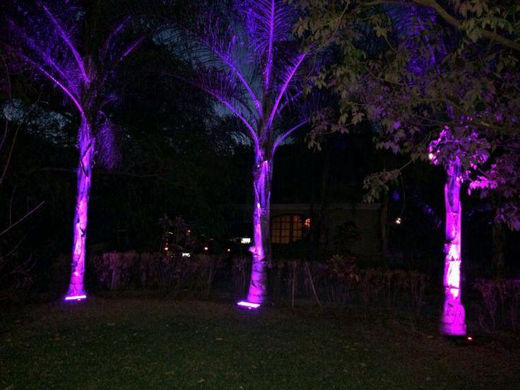 23 best iluminacion images on pinterest architecture for Iluminacion para palmeras