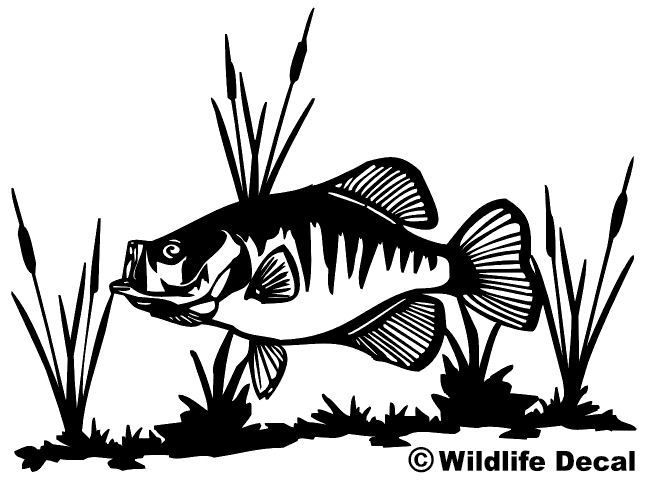 Crappie and cattails decal md wildlife outdoors fishing for Fishing stickers and decals