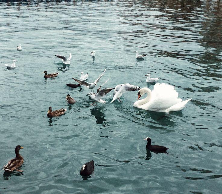 Zurich lake, Zurich, Switzerland