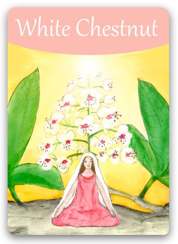 Bach Flower Cards [White Chestnut] - Negative White Chestnut state can occur when a person or his ideas have been attacked by adversaries - and especially if the attack has come from those he felt were allies. The situation may become resolved on the surface, but the inner turmoil and brain chatter remains. After treatment, the mind once again becomes clear and balanced. The individual can connect with and hear the guidance from his Higher Self and use his powers of thought constructively.