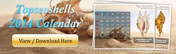 Sea Shell of Topseashells : Specimen Seashells for sale for your Shell Pleasures