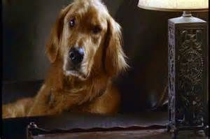 What Kind Of Dog Is In The Jesse Stone Movies