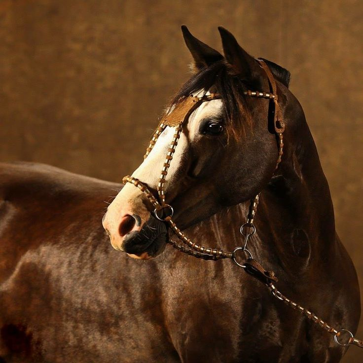 Horse In Latin 45 best Criollo images...