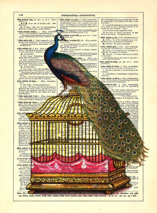 peacock: Artsy Things, Peacocks, Home Kitchens, Book Prints