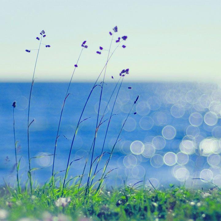 La brezza è il tipico venticello primaverile ed estivo che rende piacevole starsene all'aperto a gustare un libro o un gelato in perfetto relax. Aforismi, citazioni e frasi sul tema della brezza.