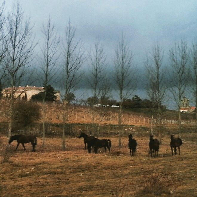 Caballos en el campo. Paisajes bonitos aunque el día esté nublado. De fondo, el castillo!