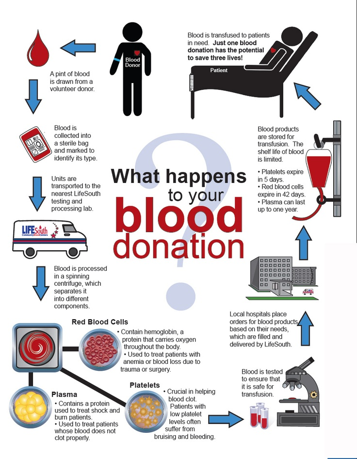 Essay on blood donation
