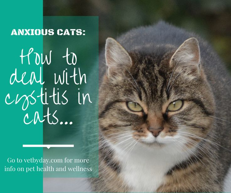 """Anxious Bladders What to do when your anxious cat has urinary tract problems…  Cats are such independant creatures. They go about their daily business with an air of grace and importance. Human-Cat interaction is generally on their terms only – and heaven help you if you break the feline affection rules. But behind the…  Continue reading """"Bladder Problems in Cats"""""""