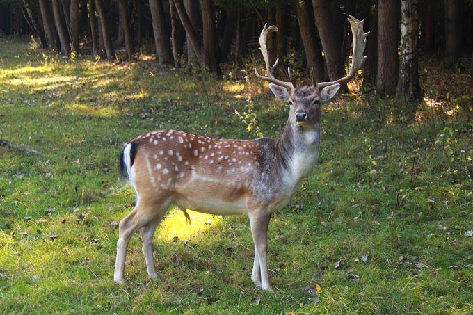 Follow deer