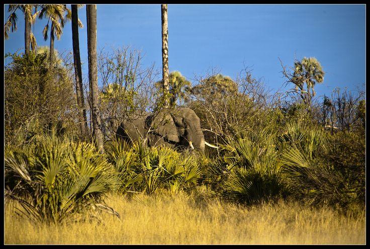 Oplev det smukke og magiske Botswana. Et land ikke mange besøger, men som besider store naturskatte, så som det storslåede Okavango Delta, med grønne og frodige sletter, der smelter sammen med de uendelige sandklitter i Kalahari ørkenen. Botswana er et enestående naturligt eventyrland og hjem for et væld af Afrikas dyr og planter. Næsten en fjerdedel af dette land er afsat til vildtreservater og disse fjerntliggende og uberørte naturområder tilbyder nogle af de bedste game drives i Afrika.