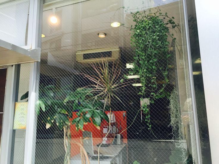 #観葉植物#吊り下げ#店舗#美容室#大阪#堀江#ポリッシュ#ドット#カスタムヘア#イメチェン#