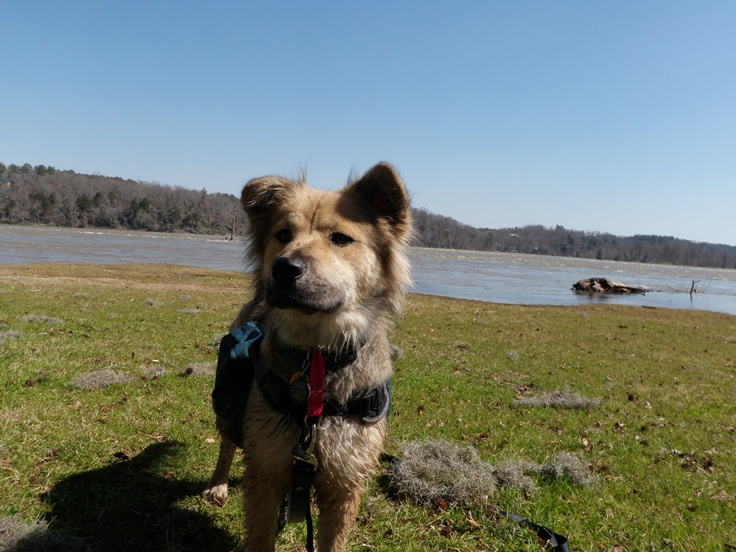 15+ Loudoun county animal control images
