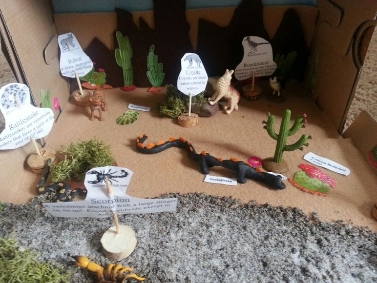 Sonoran Desert Biome shoebox Diorama
