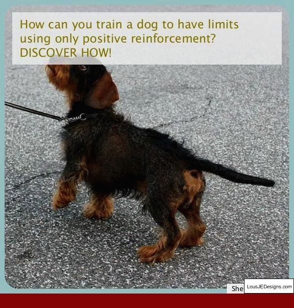 Training Puppy Tips Dog Whisperer And Pics Of How To Train Your