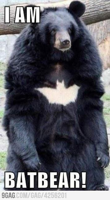 I want a Batbear.Basebal Bats, Bats Caves, The Dark Knights Funny, Cutefunni Animal, Knights Rise, Fun Stuff, Funny Stuff, Care Bears, Bats Bears