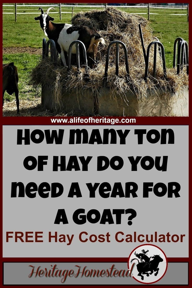 338 best images about farm goats on pinterest hay feeder for Cost to build calculator free