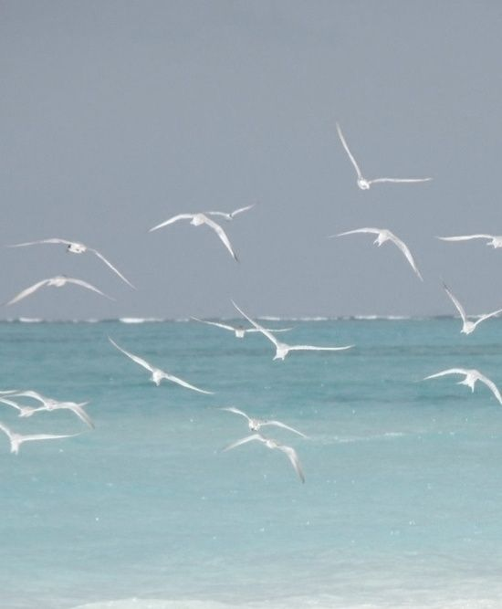 seagulls in flight over the sea • ocean • waves • nautical • sailing ship high seas • riawati