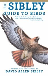 Sibley is a book every birder should have in the library. You can even get it in app form.