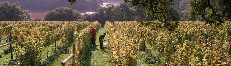 Sharpham Vineyard, English Wine, England Wines and Cheese