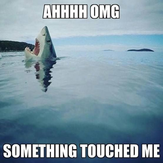 This week is shark week. ><{{^{•> The Facts: Shark Week premiered July 17, 1988. Created by Tom Golden. (Discovery Channel) It started as a way to clear up myths and misconceptions …