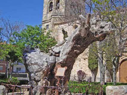 """El poema """" a un olmo seco"""", creado por Antonio Machado, en la primavera  de 1912 en Soria, es un viaje a la esperanza, para la recuperación de su mujer Leonor, con quien pasea cada día en busca del aire puro soriano. Tres meses después la joven esposa hará su último viaje,  y el poeta cambiará de destino para siempre."""