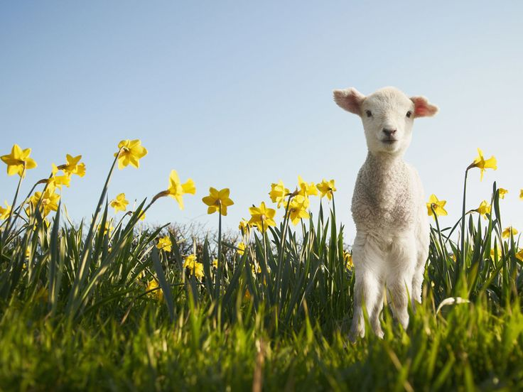 12 reasons why Spring is simply the best  - countryliving.co.uk