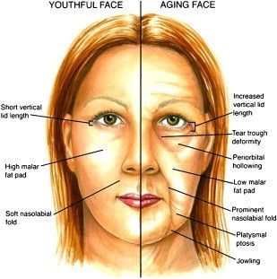 Top 6 Anti-Aging Herbs - Best Anti Aging Herbs To Keep Your Skin Young | Home Remedies http://visagelabs.com