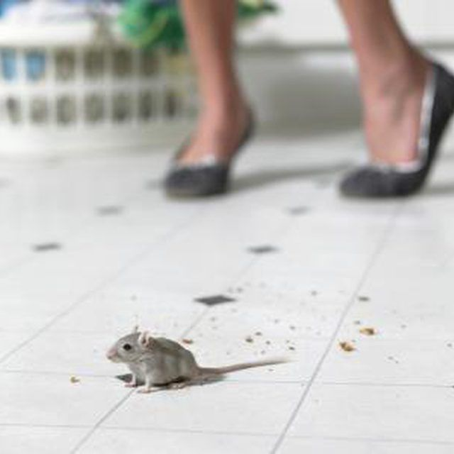 Mouse on kitchen floor
