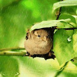 sheltering