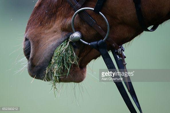 Fotografía de noticias : A horse enjoys a pick of grass after exercising...