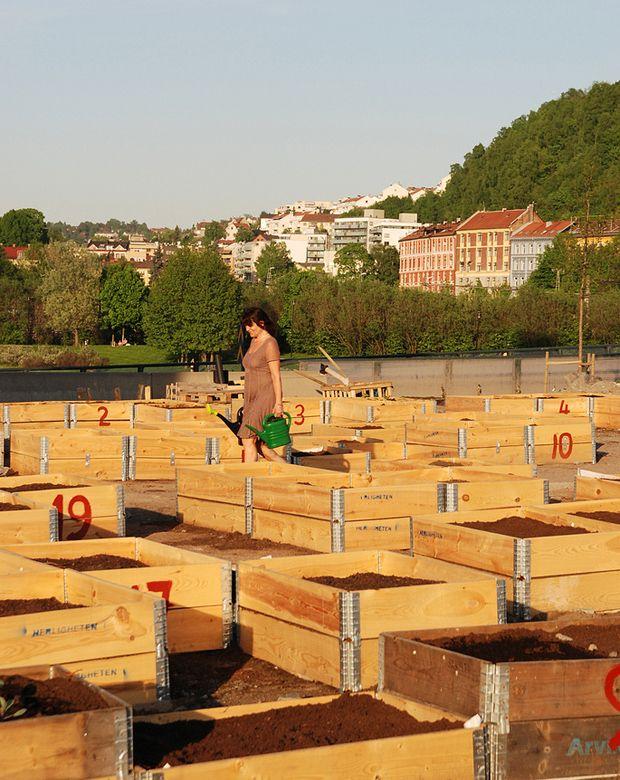 Die Grundlage aller urbanen Gemüsegarten - Projekte: Hochbeete. Verwendet keine chemisch behandelten Bretter..