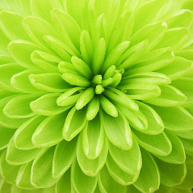 the chrysanthemums and the storm In the story the storm, by kate chopin, and the chrysanthemums, by john steinbeck, imagery is an integral element in the development of the characters and.