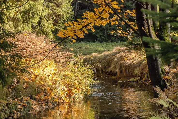 Höstskog vid bäcken