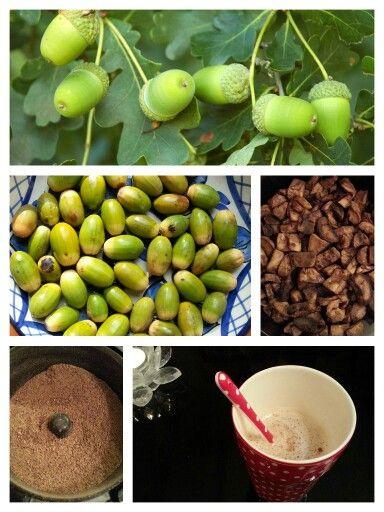 EIKELTJESKOFFIE Ingrediënten: - handvol eikels - water - suiker, cacao, melk of kaneel Bereiding: Pel de eikels. Kook de eikels 15 minuten (zo verdwijnt de bittere smaak). Haal de dunne velletjes eraf en droog de eikels af. Snijd de eikels in stukjes, zo groot als een koffieboon en rooster die in een pan tot ze een zachte notengeur verspreiden. Nu hebben ze een bruine koffiekleur. Maal de eikels nadat ze zijn afgekoeld tot poeder. Neem 1 eetlepel van de koffiepoeder, voeg 1,5 kopje water toe…