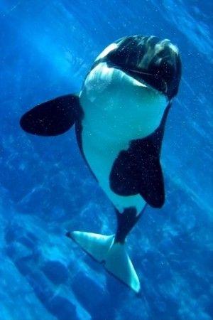 Killer Whale, ocean pictures