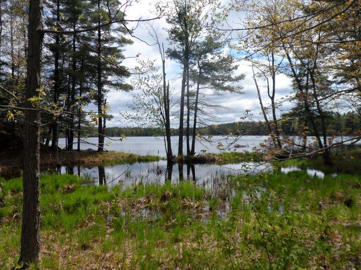 Doe Lake at Frontenac Provincial Park @Ontario Parks