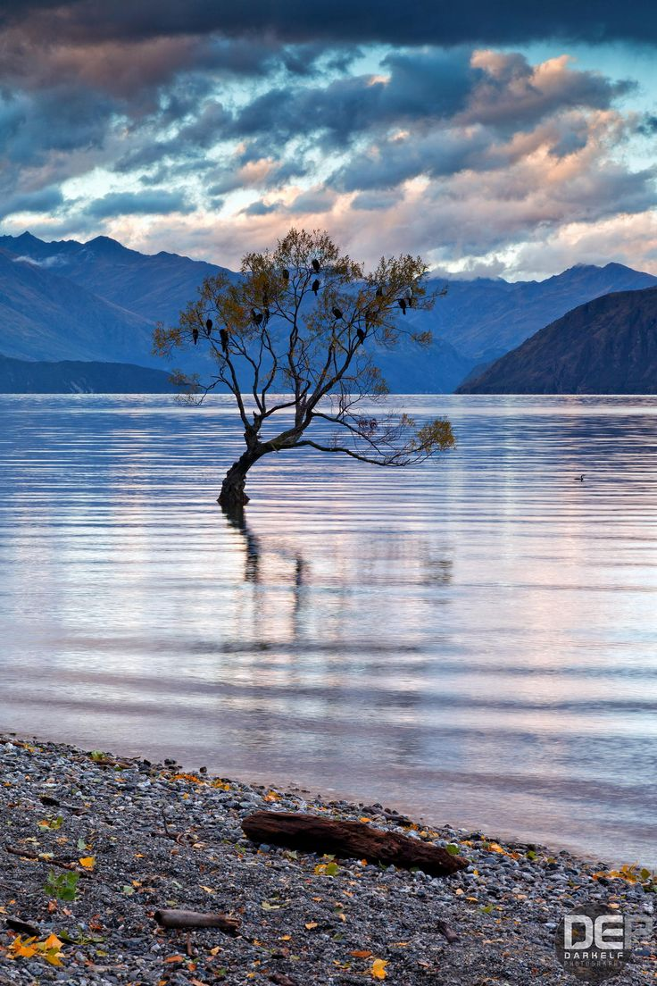 Ethereal landscapes nature photography by donna geissler -  Lake Wanaka Tree Photo By Darkelf Photography Via 500px In New